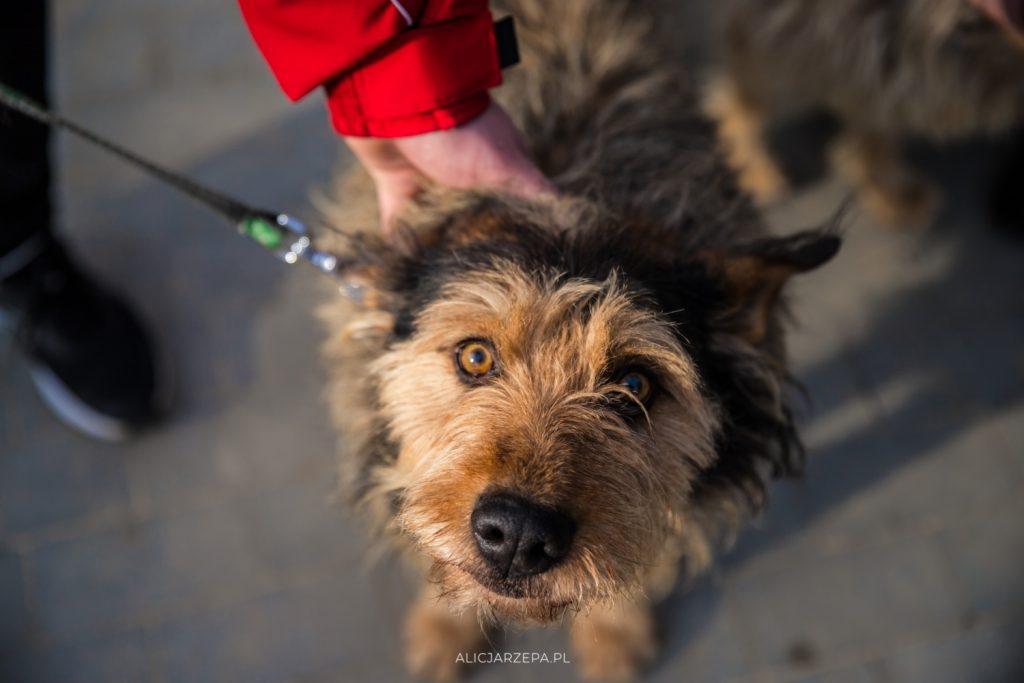 Dzień Otwarty Krakowskiego Towarzystwa Opieki nad Zwierzętami / fotoreportaż / © Alicja Rzepa