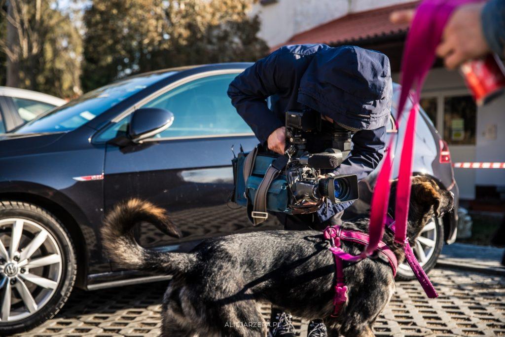 Dzień Otwarty Krakowskiego Towarzystwa Opieki nad Zwierzętami / fotoreportaż / © Alicja Rzepaortaż / © Alicja Rzepa